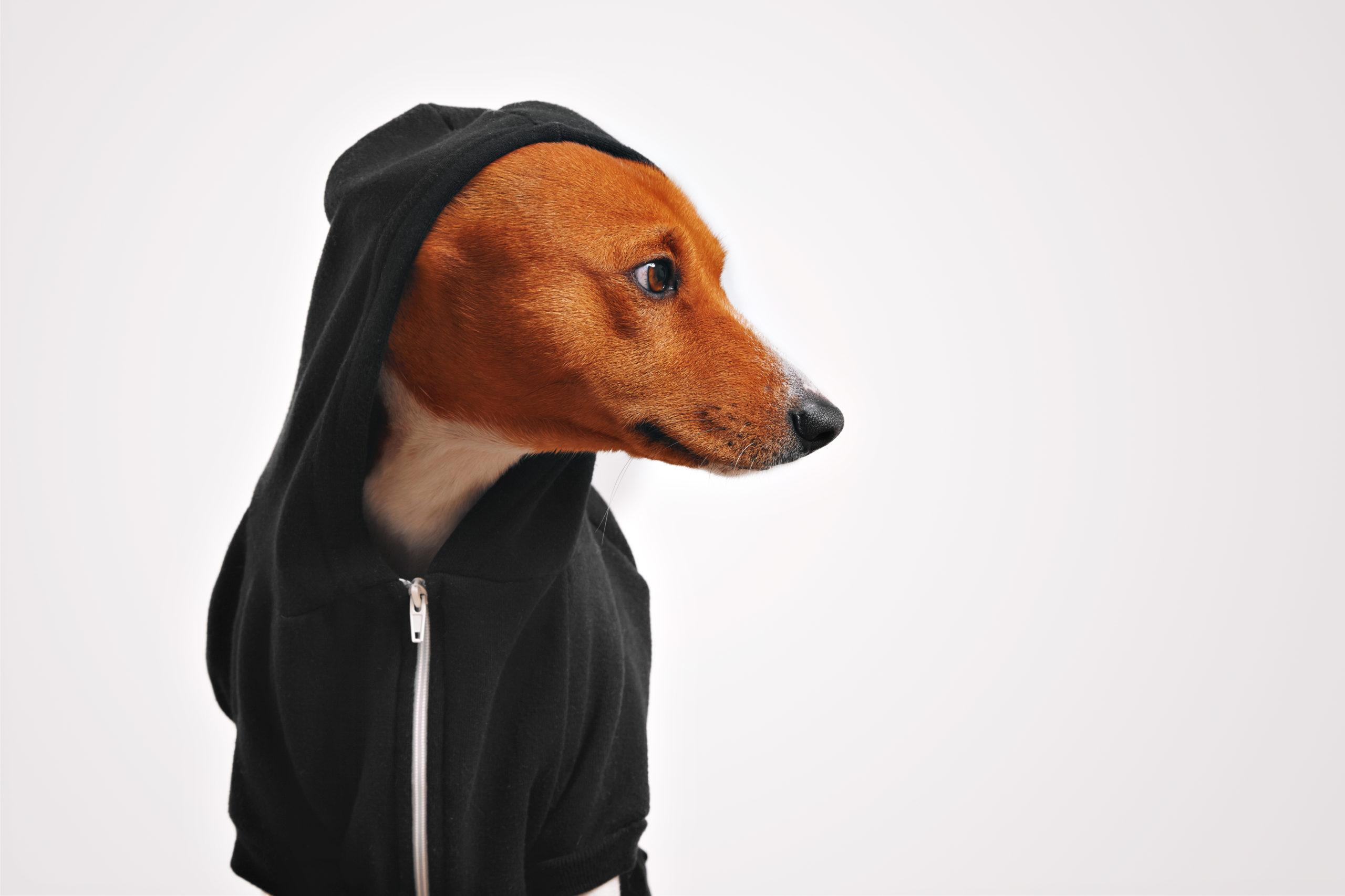 เสื้อผ้าสุนัข