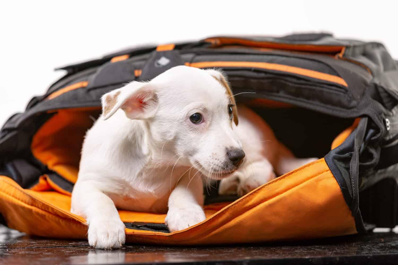 กระเป๋าสุนัข